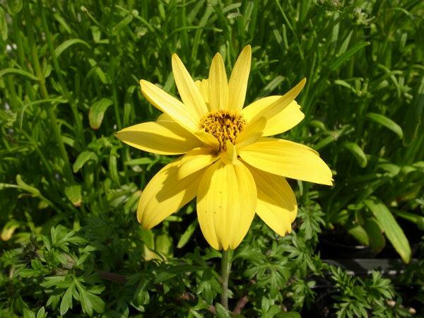 まで 咲く 春 から 花 秋 春から秋まで長く咲く花!ガーデニング初心者におすすめの花13選!